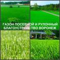 Газон рулонный и посевной Воронеж посадка