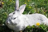 Крольчата и кролы